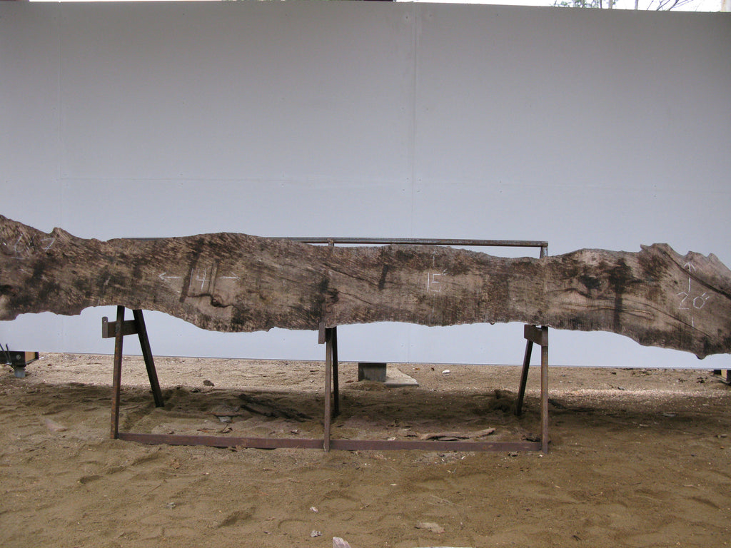 "Spalted Birch B Slab 3"" x 16"" x 14' SPB-667"