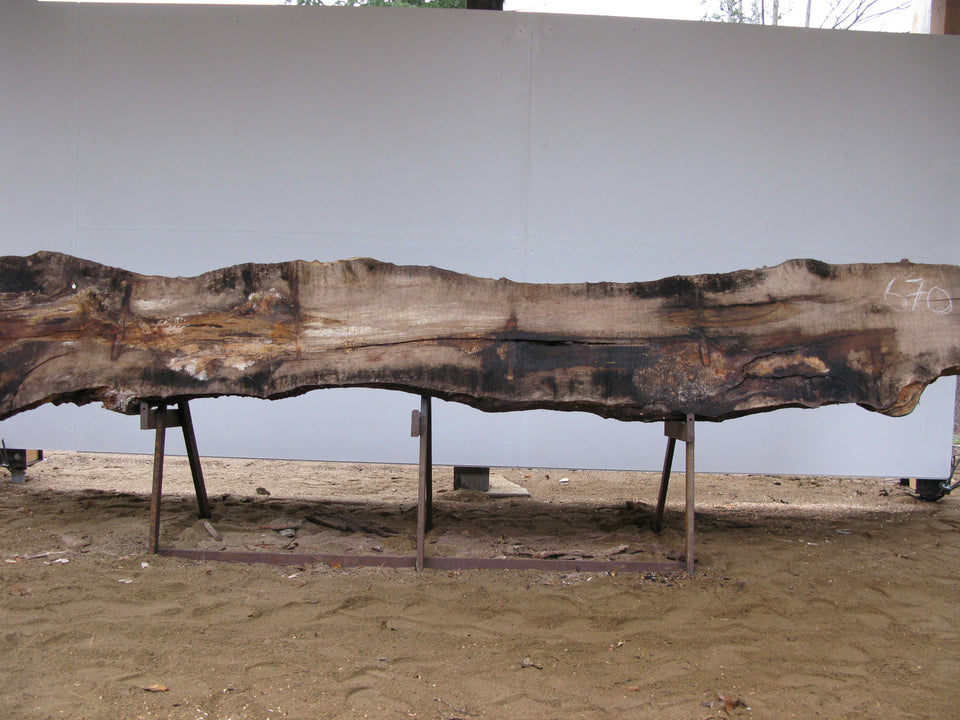"Spalted Birch B Slab 3"" x 21"" x 11' SPB-670"