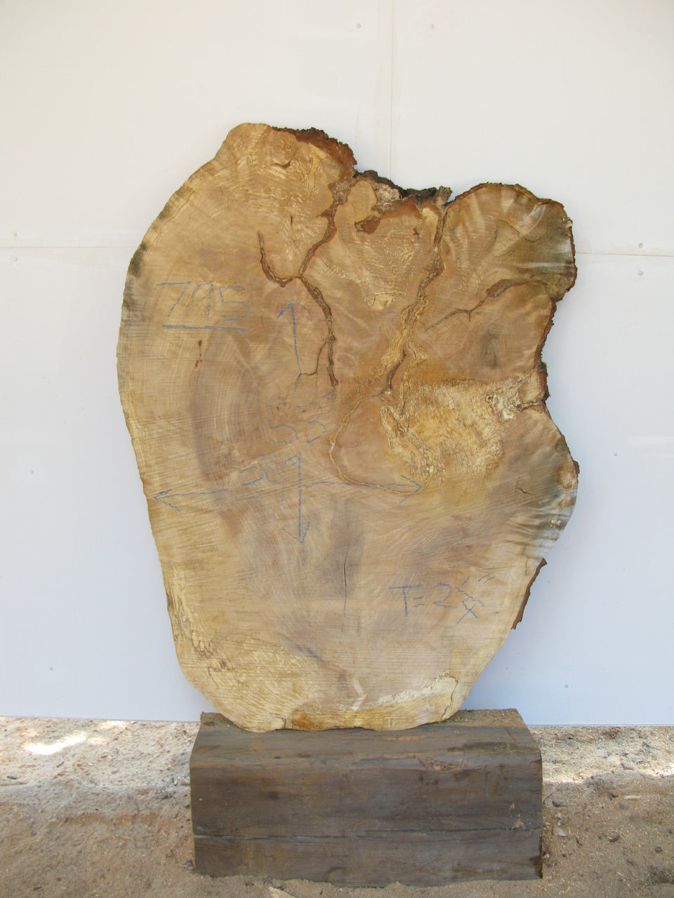 "Yellow Birch Burl Slice 2.25"" x 39"" x 53"" SKU795"