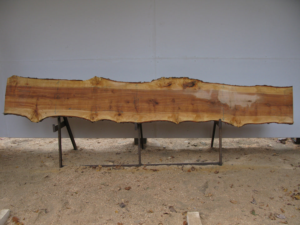 "Yellow Birch Slab with Epicormic Budding - 2"" x 18.5"" x 12' - YB-077"
