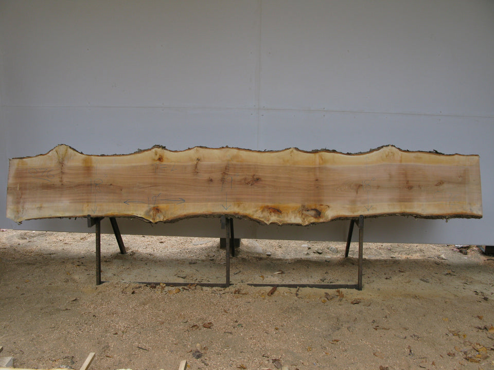 "Yellow Birch Slab with Epicormic Budding - 2"" x 18.5"" x 12' - YB-076"