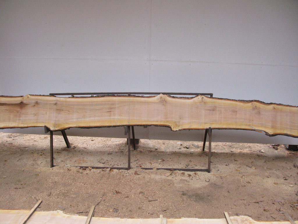 "Yellow Birch Slab with Epicormic Budding - 2"" x 14.5"" x 14' - YB-072"