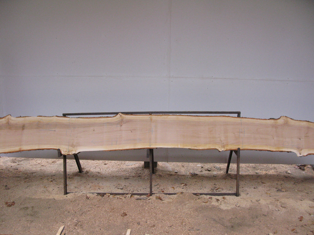 "Yellow Birch Slab with Epicormic Budding - 2"" x 14"" x 14' - YB-070"