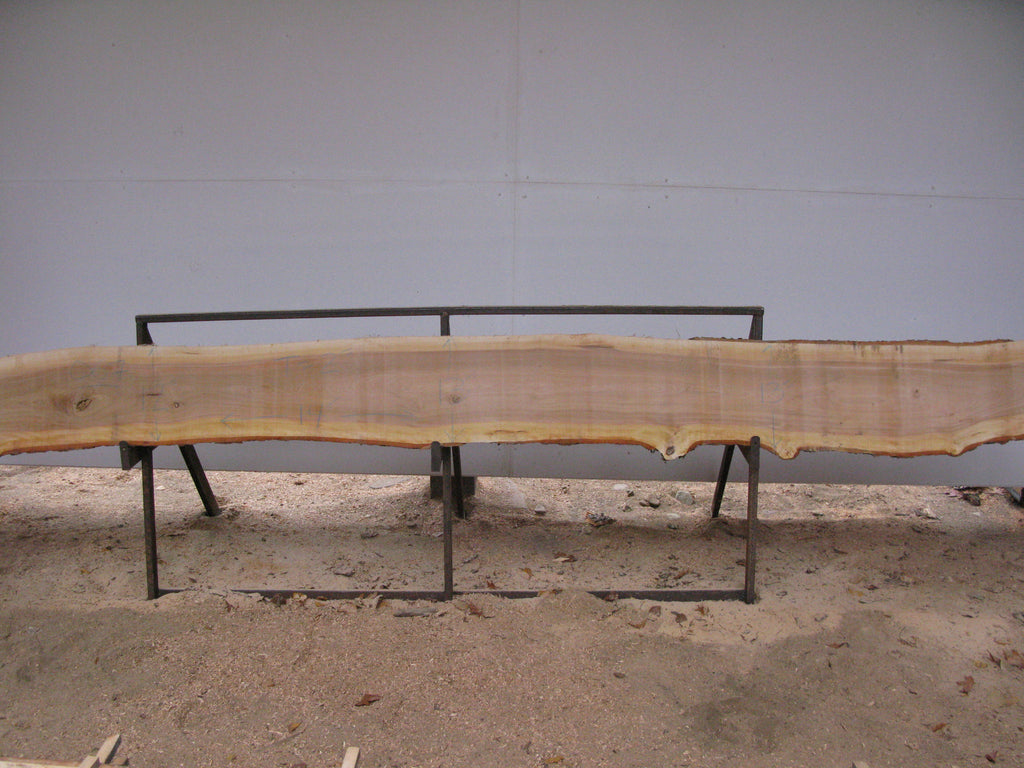 "Yellow Birch Slab with Epicormic Budding - 2"" x 13"" x 14' - YB-068"