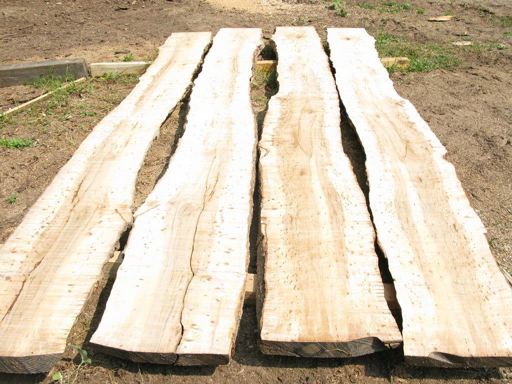 Birds Eye Maple. 4 Slab Table Set. 12' long. SKU 0733-18