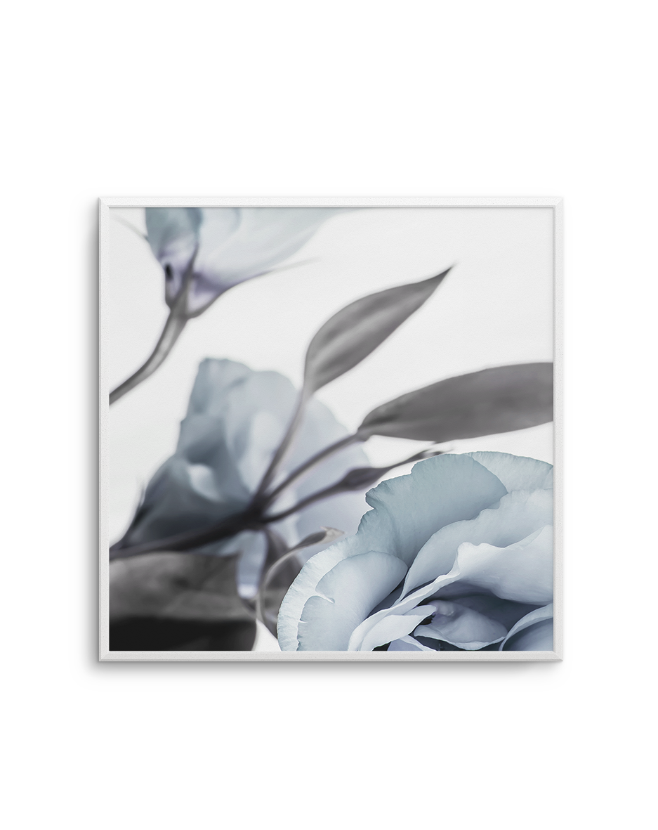 BLUE LISIANTHUS NO 1 SQ