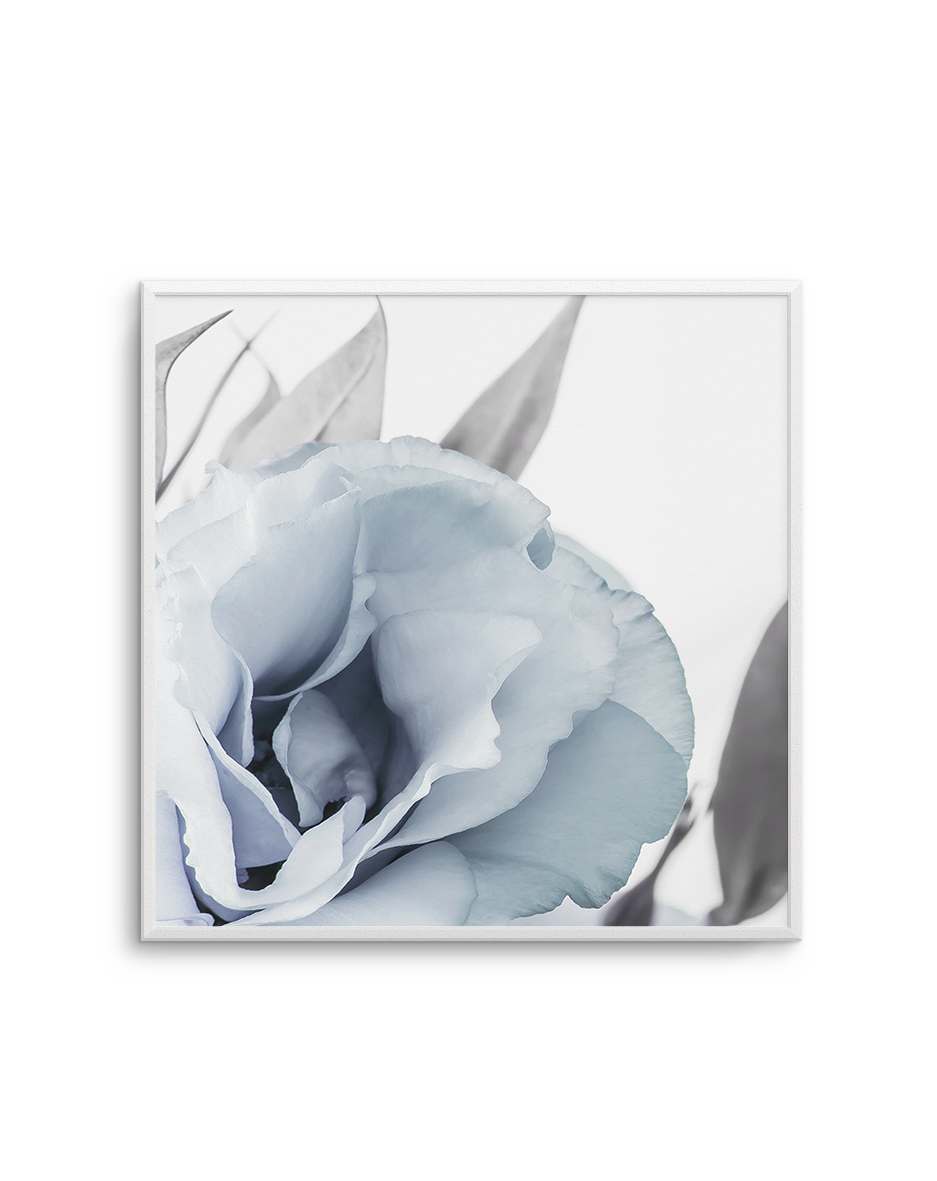 BLUE LISIANTHUS NO 3 SQ
