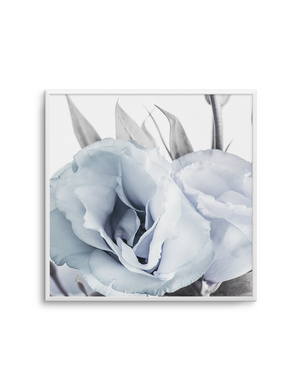 BLUE LISIANTHUS NO 4 SQ