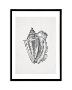 Conch Shell on Linen