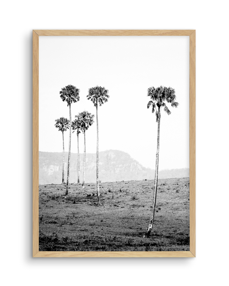 ISLAND LUXE IV - THE LOST PALMS