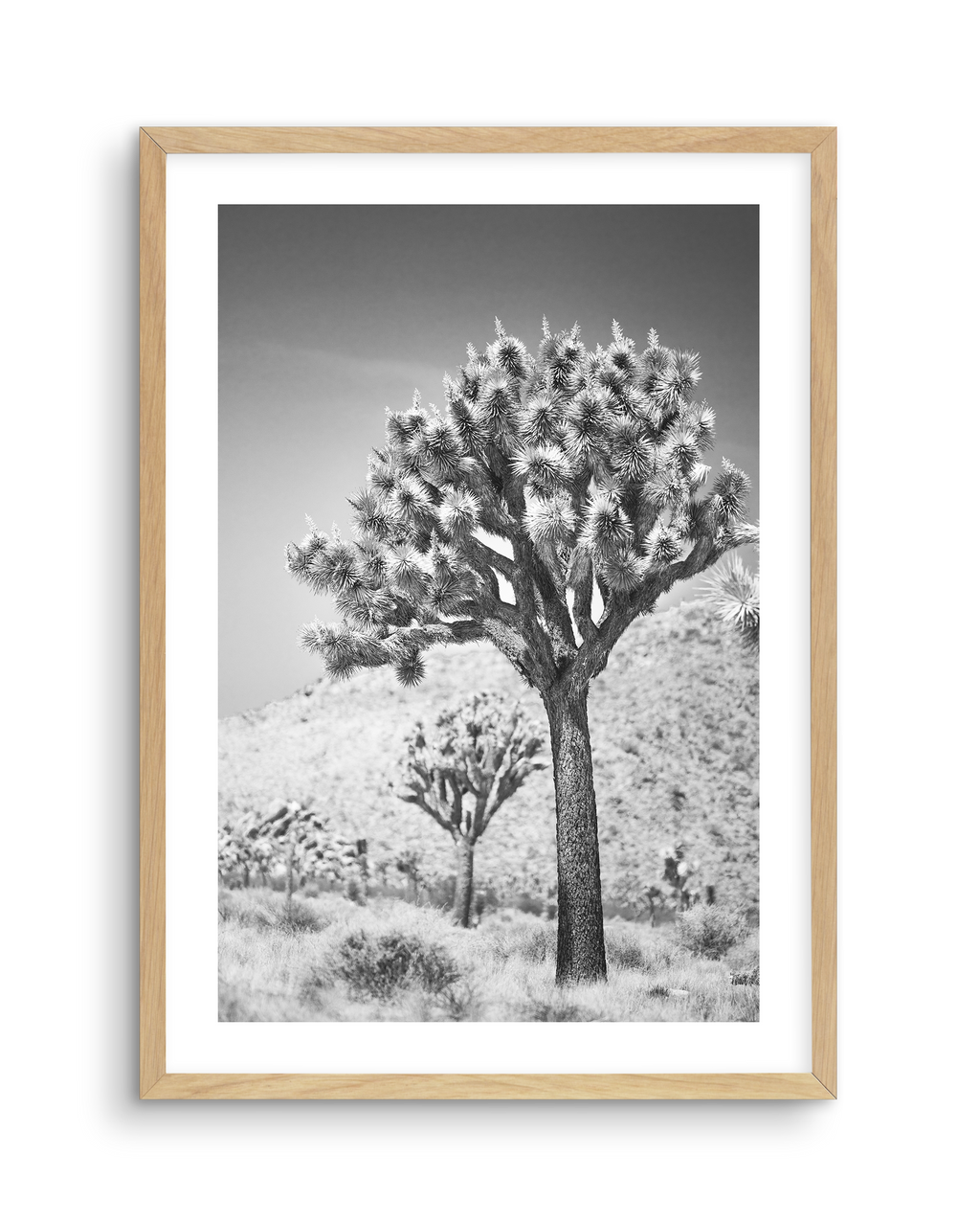 Joshua Tree| B&W | NO 3