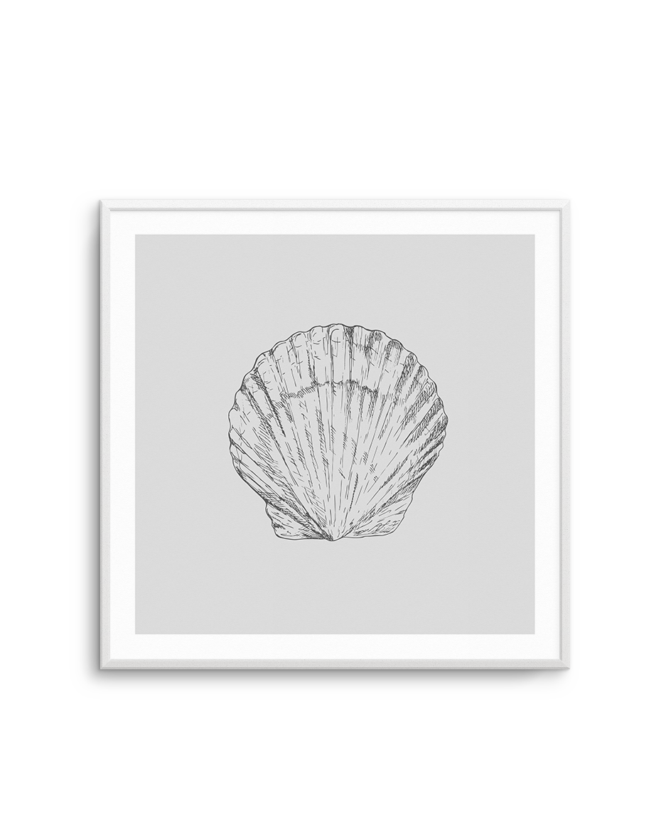 Seashell | Bay Scallop SQ