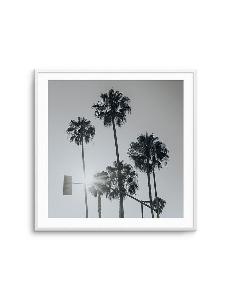 Venice Palms | B&W SQ