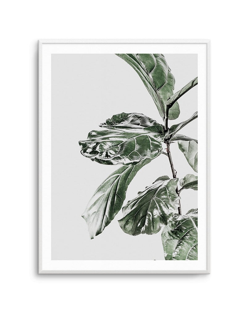 Abstract Fig II - Olive et Oriel | Shop Art Prints & Posters Online