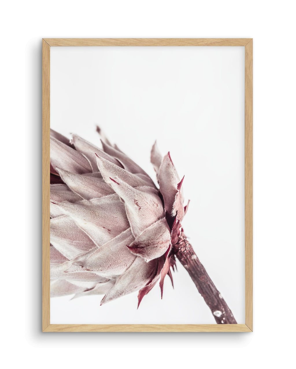 Abstract Protea No I - Olive et Oriel | Shop Art Prints & Posters Online