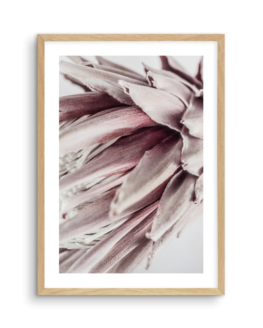 Abstract Protea No II - Olive et Oriel | Shop Art Prints & Posters Online