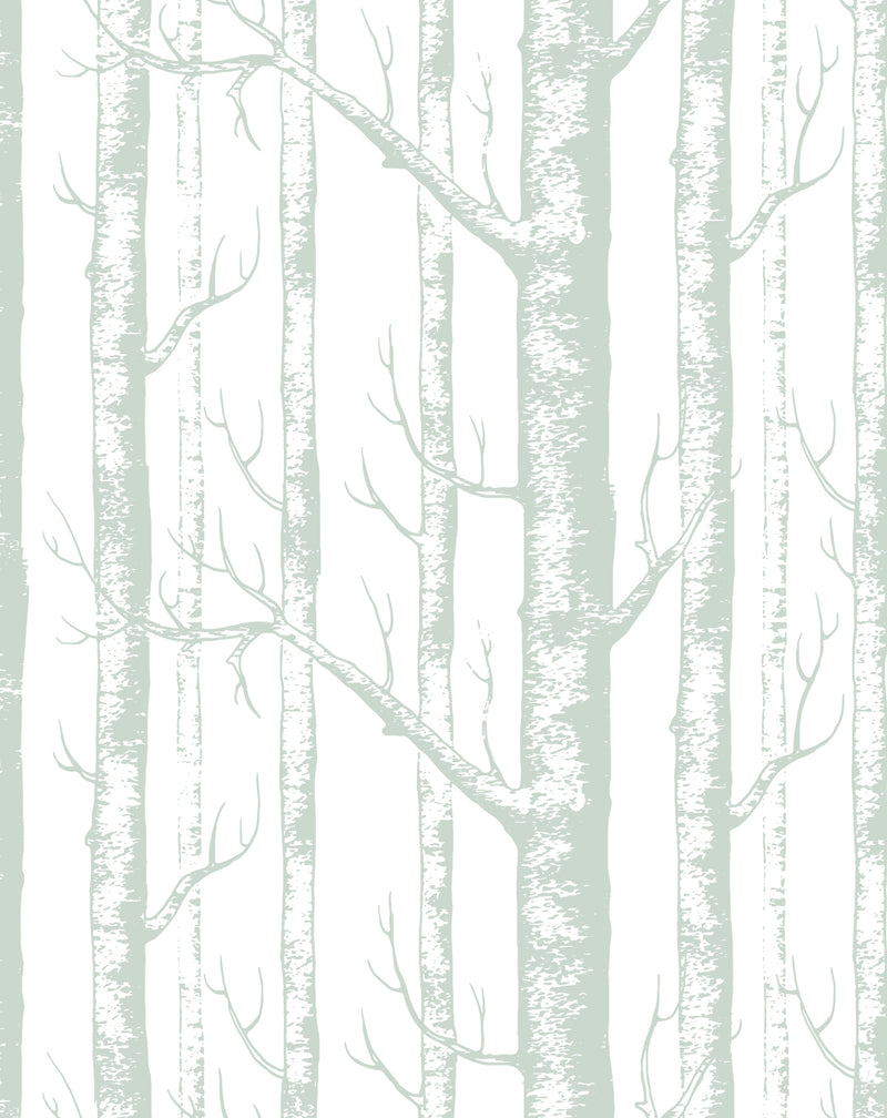 Birch Trees in Sage Wallpaper