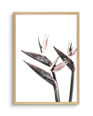 Bird of Paradise - Olive et Oriel | Shop Art Prints & Posters Online