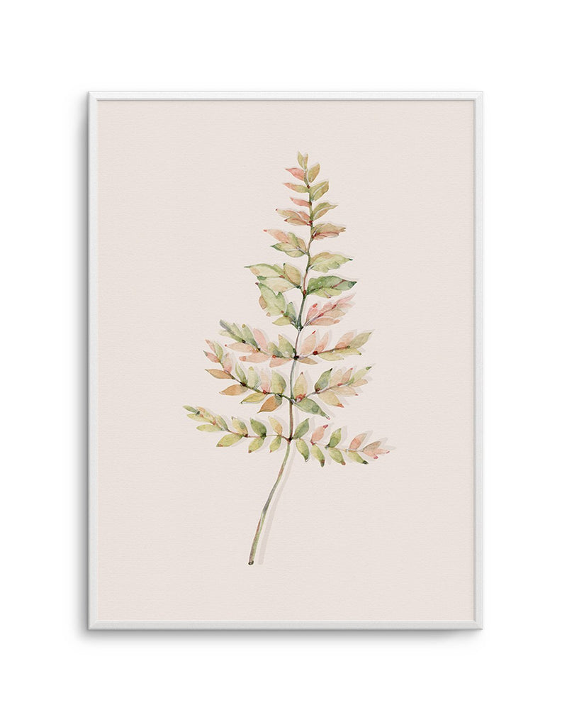Blushing Fern II | Watercolor - Olive et Oriel