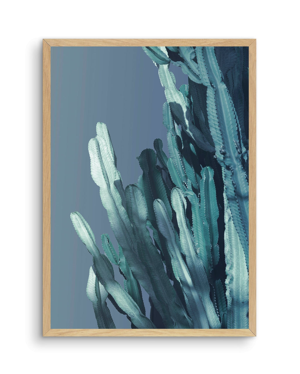 Cactus In Blue No 1 - Olive et Oriel | Shop Art Prints & Posters Online