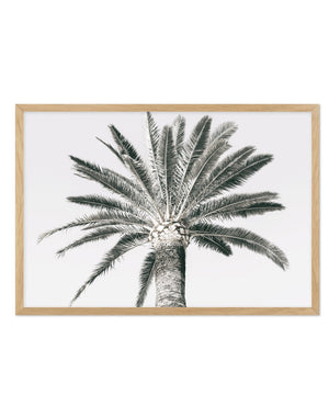 Cannes Palm LS - Olive et Oriel | Shop Art Prints & Posters Online