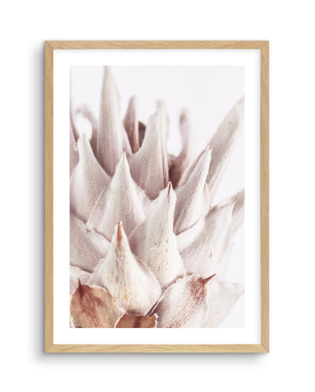 Closer Please | King Protea - Olive et Oriel | Shop Art Prints & Posters Online