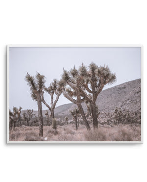 Cool Joshua Tree LS - Olive et Oriel | Shop Art Prints & Posters Online