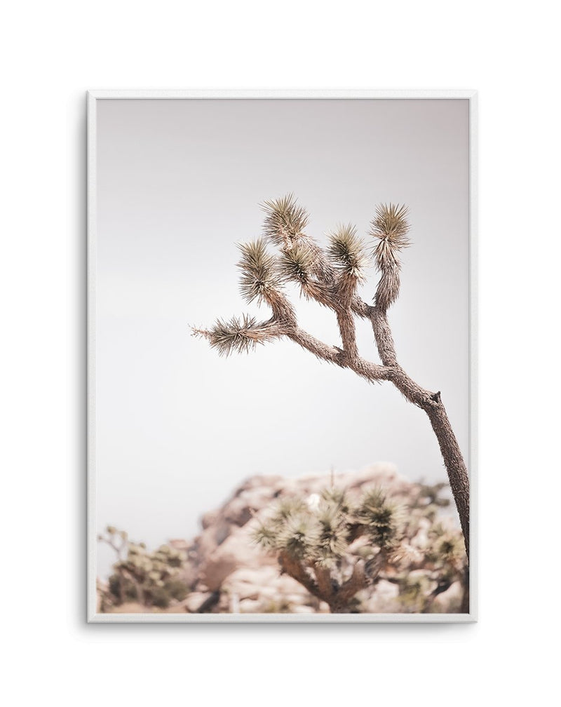 Cool Joshua Tree PT | No 1 - Olive et Oriel