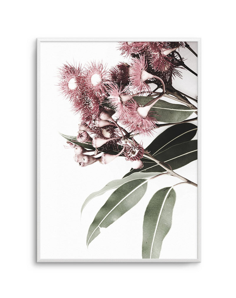 Eucalyptus in Bloom - Olive et Oriel