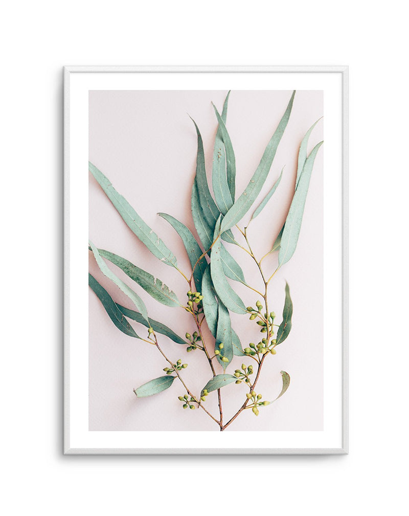 Eucalyptus on Blush - Olive et Oriel