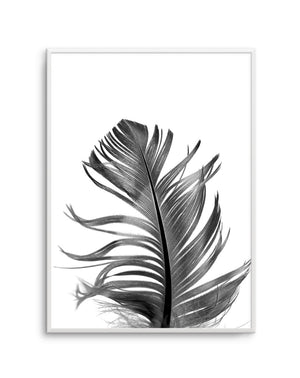Feather III | Black - Olive et Oriel | Shop Art Prints & Posters Online