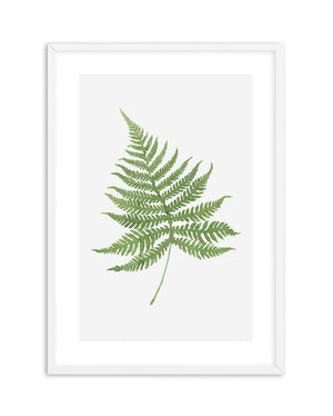 Fern On grey I - Olive et Oriel