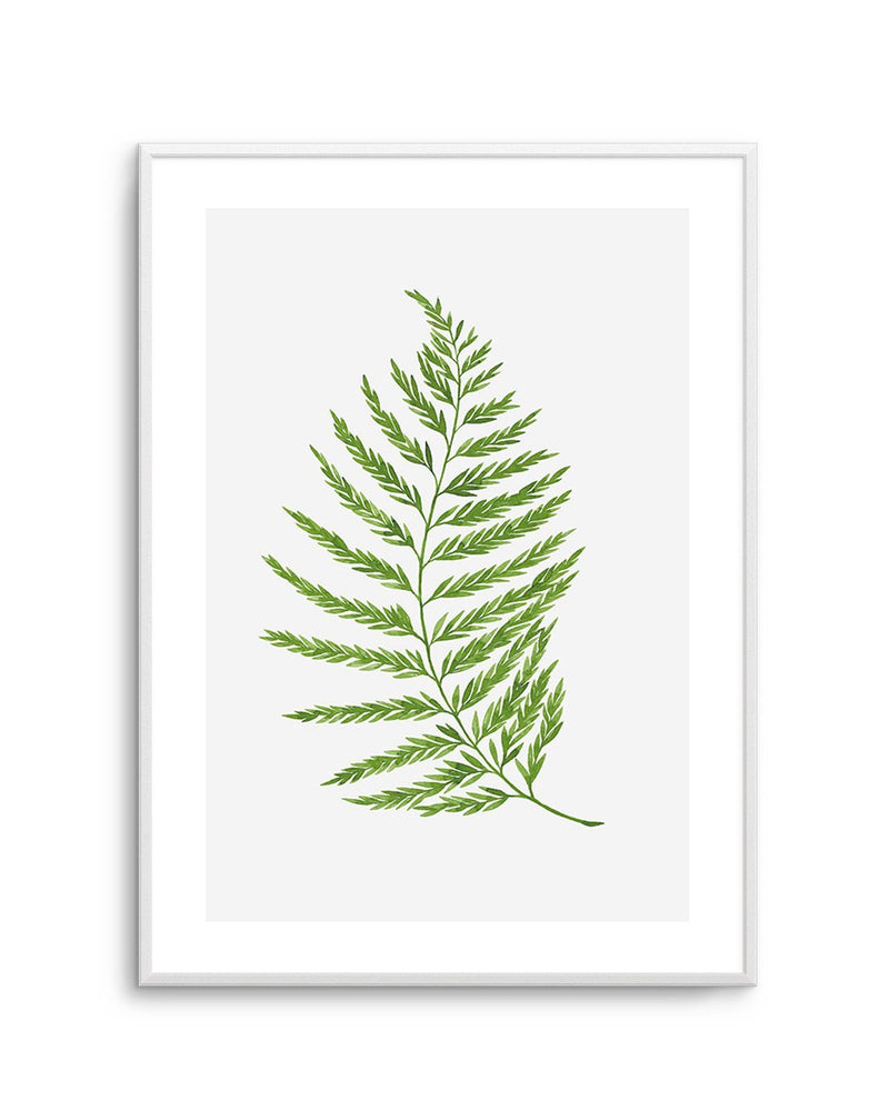Fern On Grey II - Olive et Oriel