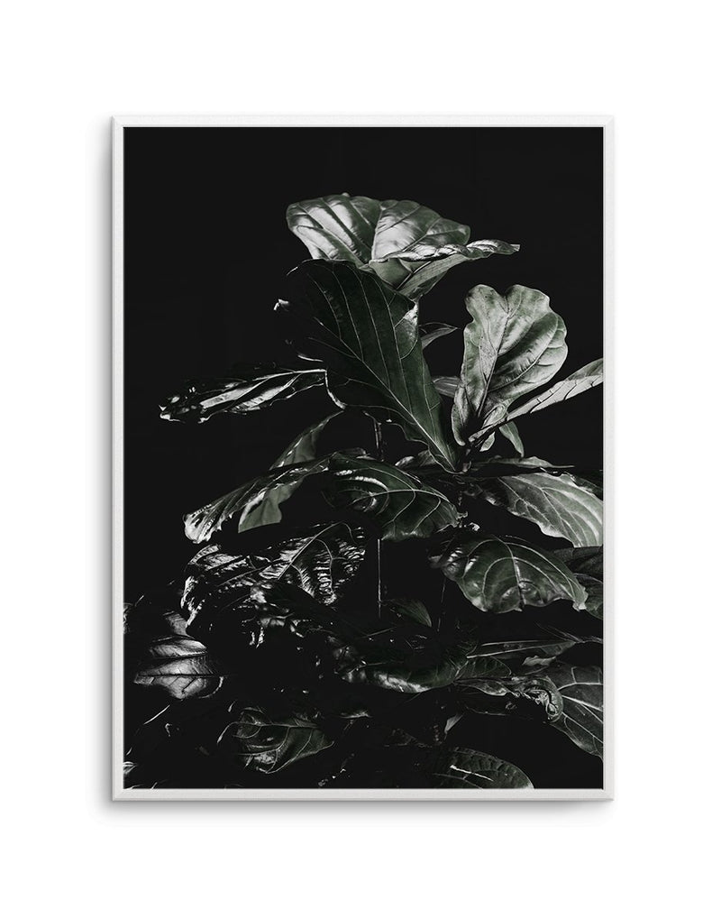 Fiddle Fig Black I