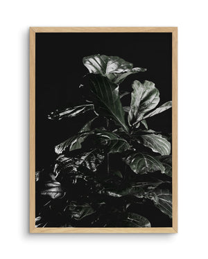 Fiddle Fig Black I - Olive et Oriel | Shop Art Prints & Posters Online