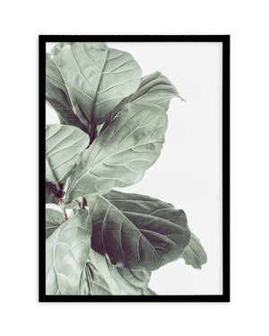 Fiddle Fig No 3 - Olive et Oriel | Shop Art Prints & Posters Online