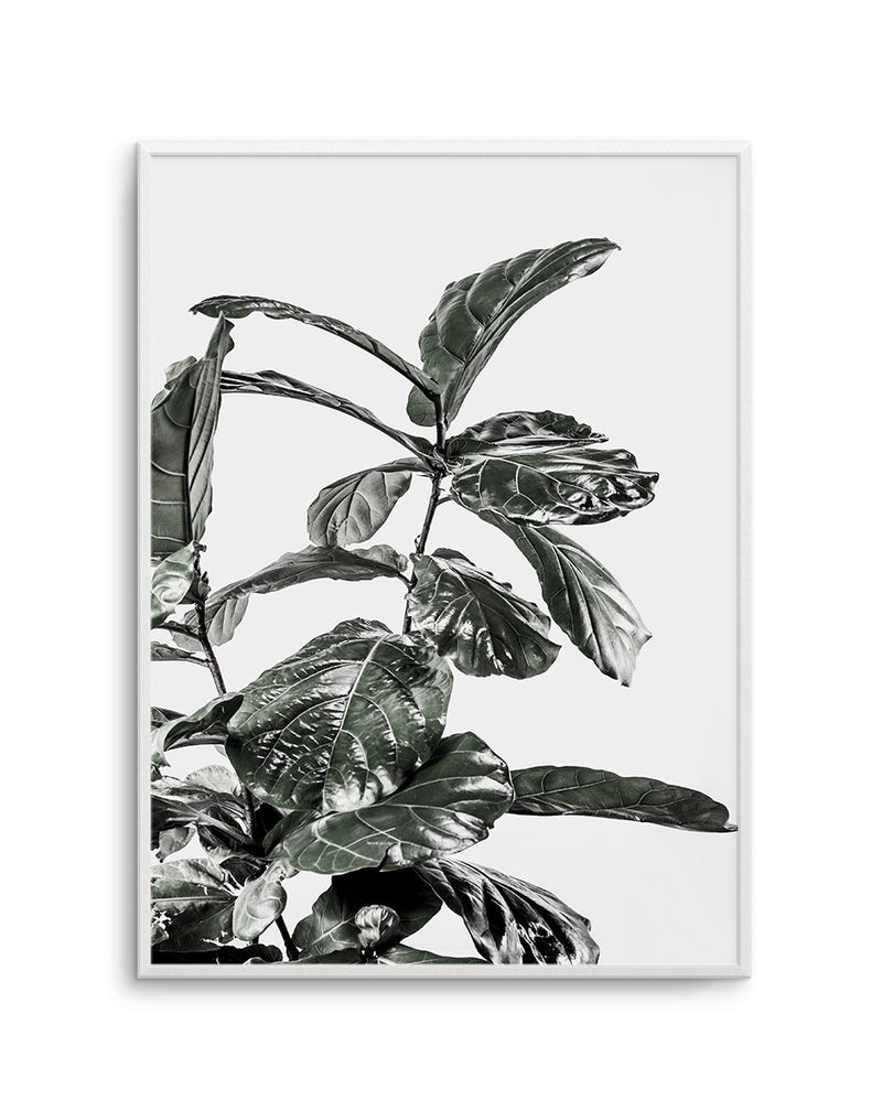 Fiddle Fig White I - Olive et Oriel