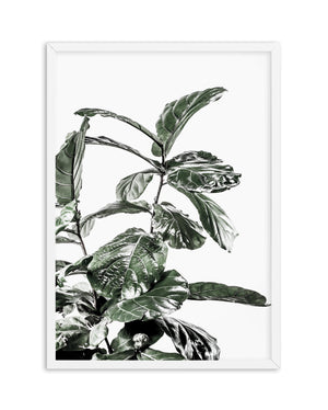 Fiddle Fig White I - Olive et Oriel | Shop Art Prints & Posters Online