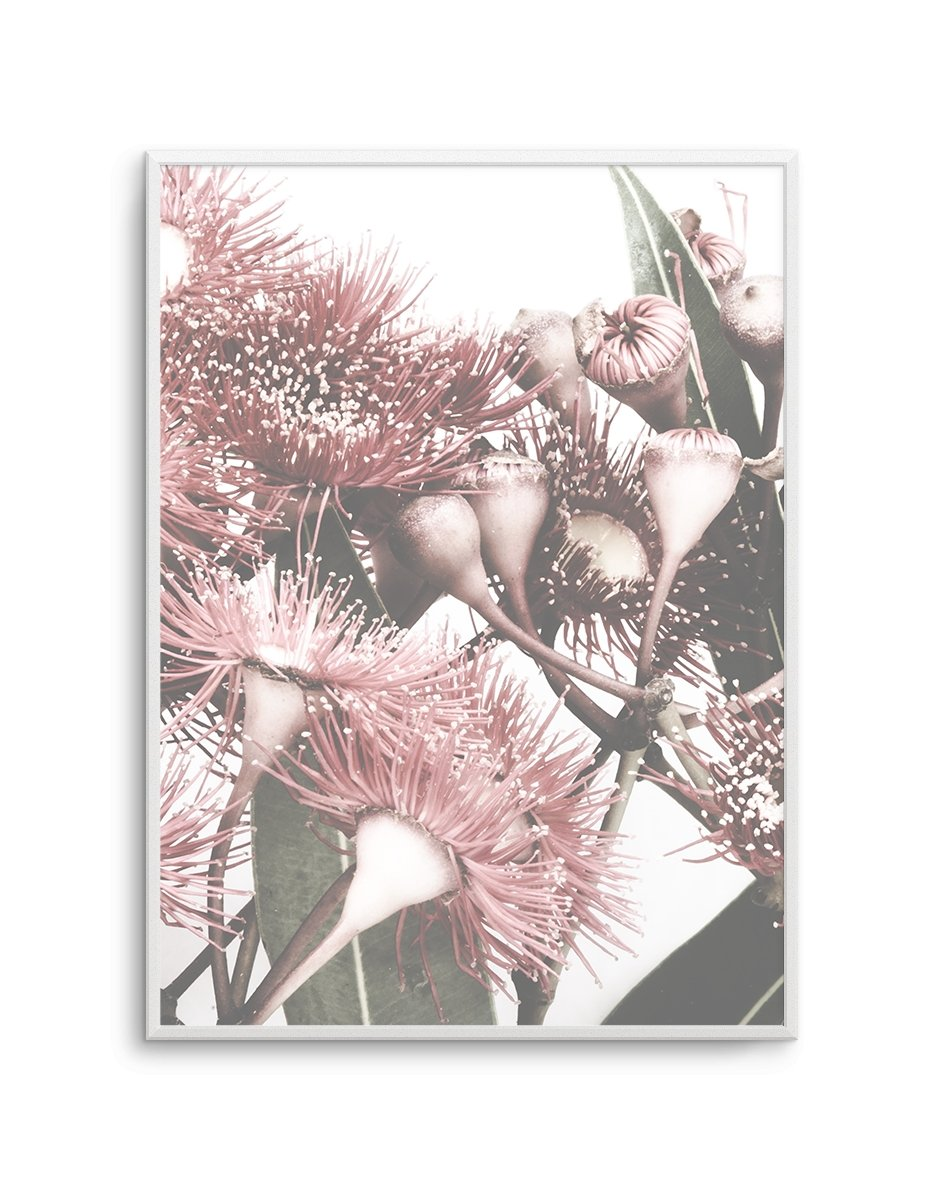 Flowering Gum No II - Olive et Oriel | Shop Art Prints & Posters Online