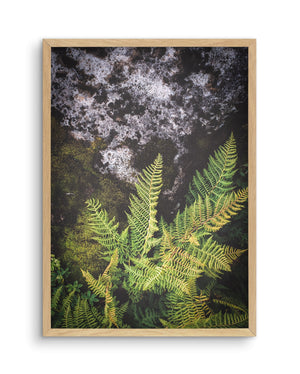 Forest Fern No 2 - Olive et Oriel | Shop Art Prints & Posters Online