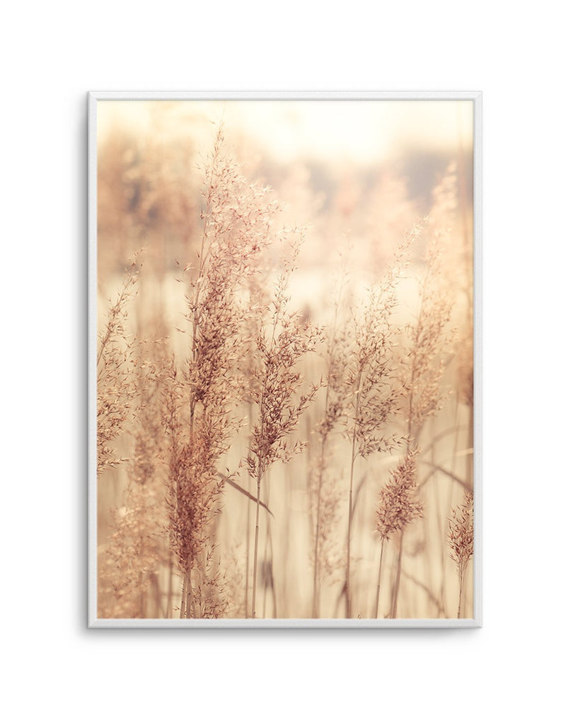 Golden Seagrass - Olive et Oriel