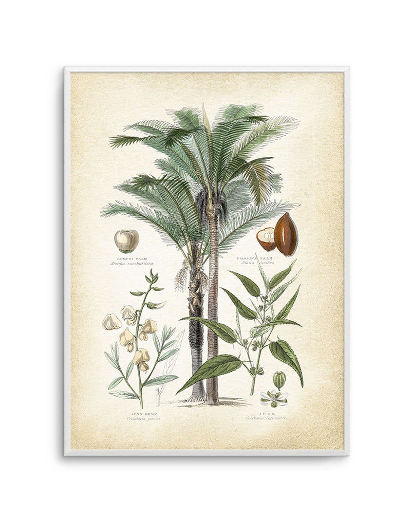 Hamptons Palm I