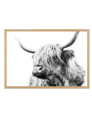 Highland Cow B&W Close-up - Olive et Oriel