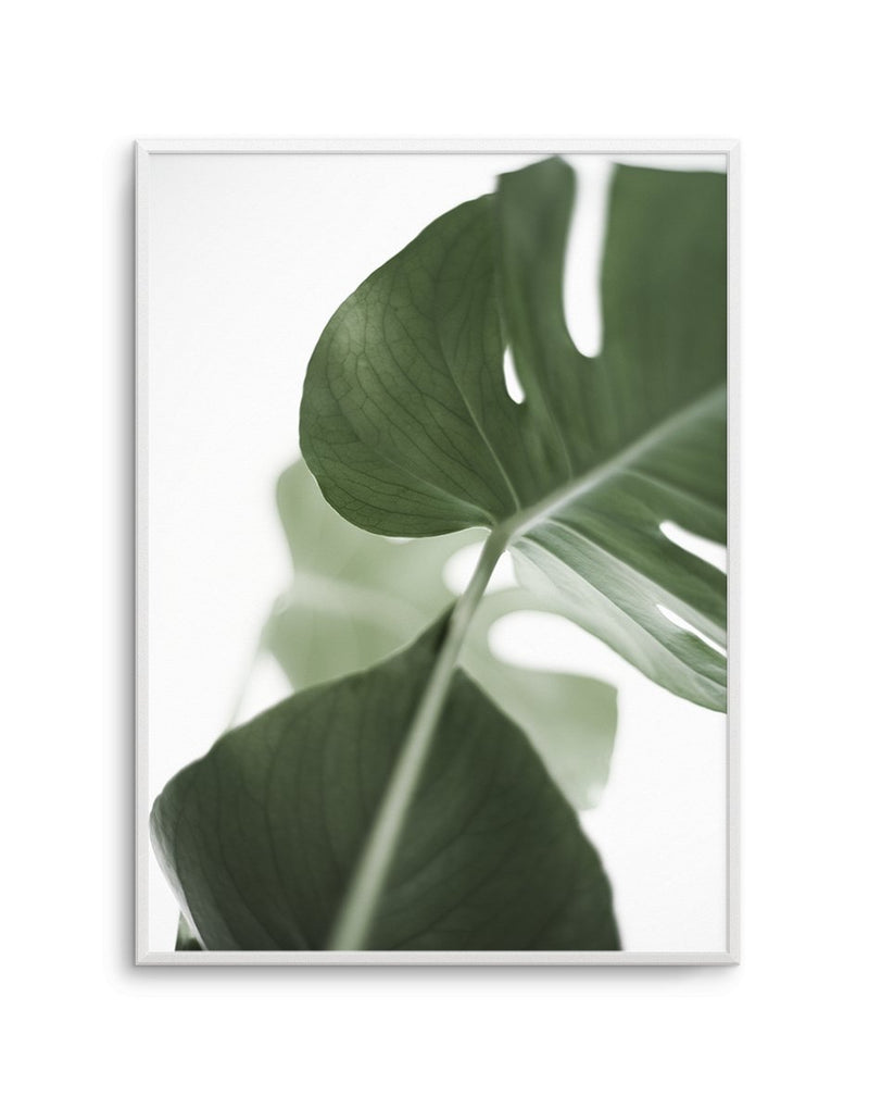 Island Luxe I | Monstera