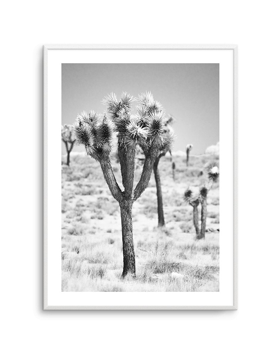 Joshua Tree | B&W | NO 2 - Olive et Oriel | Shop Art Prints & Posters Online