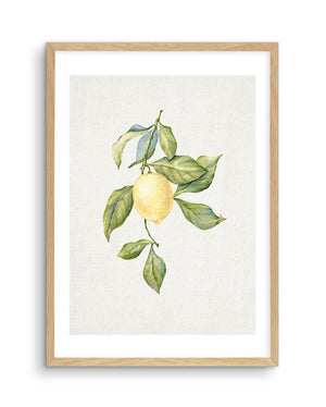Lemons on Linen #1 - Olive et Oriel