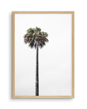 Lonesome Palm - Olive et Oriel | Shop Art Prints & Posters Online