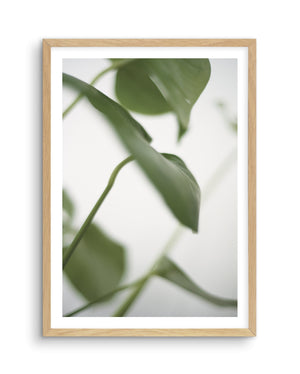 Monstera I - Olive et Oriel | Shop Art Prints & Posters Online