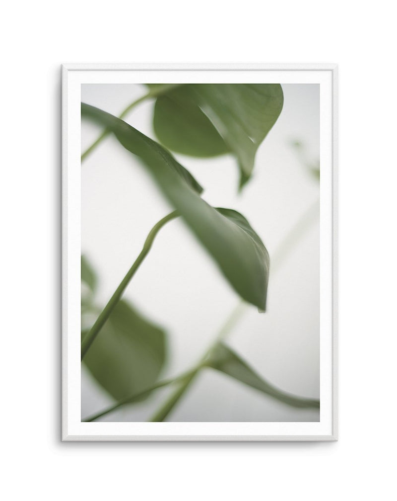 Monstera I - Olive et Oriel