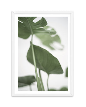 Monstera II - Olive et Oriel | Shop Art Prints & Posters Online